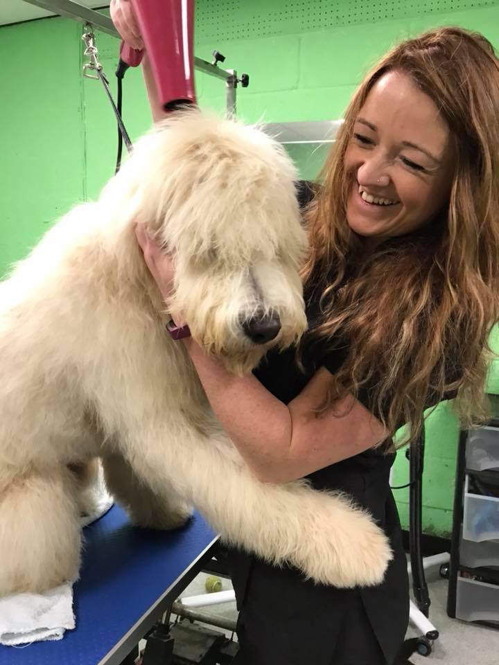 Having fun grooming a fluffy Labradoodle puppy! In Goodwick, Pembrokeshire.