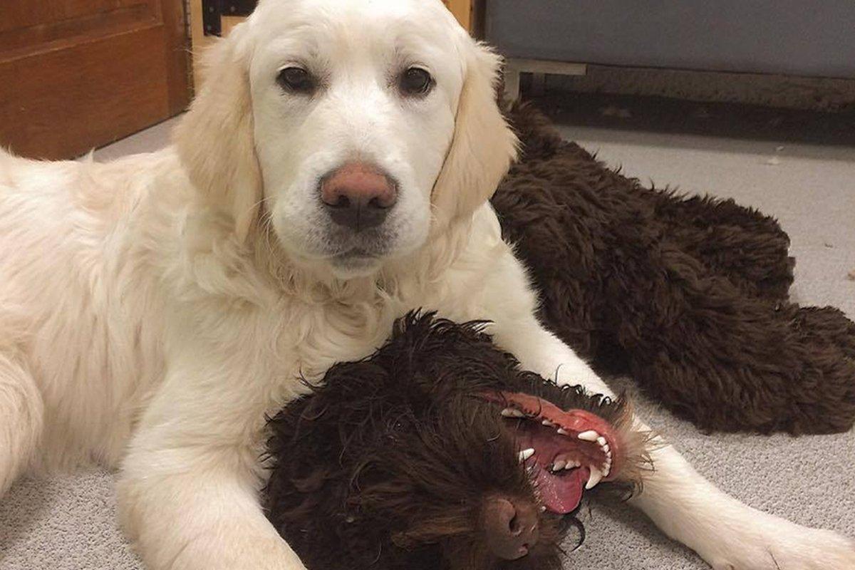 dogsbody-dog-hotel-pembrokeshire