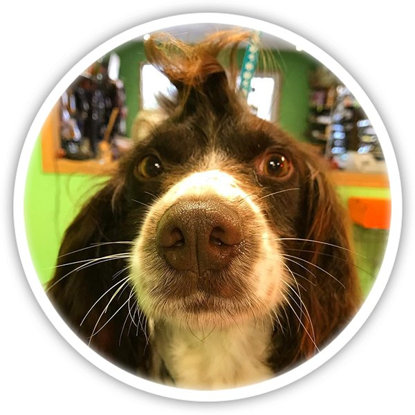 Dogsbody dog grooming in Pembrokeshire Wales