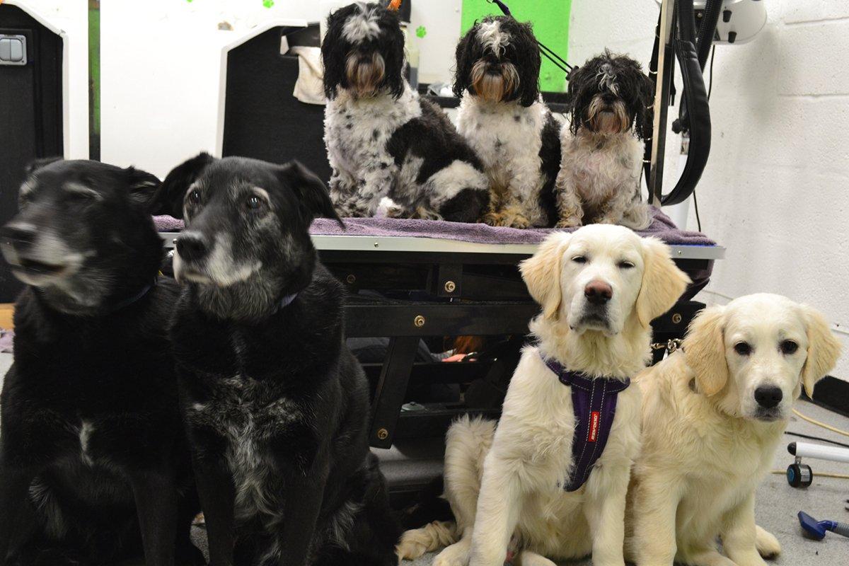 dogsbody-grooming10