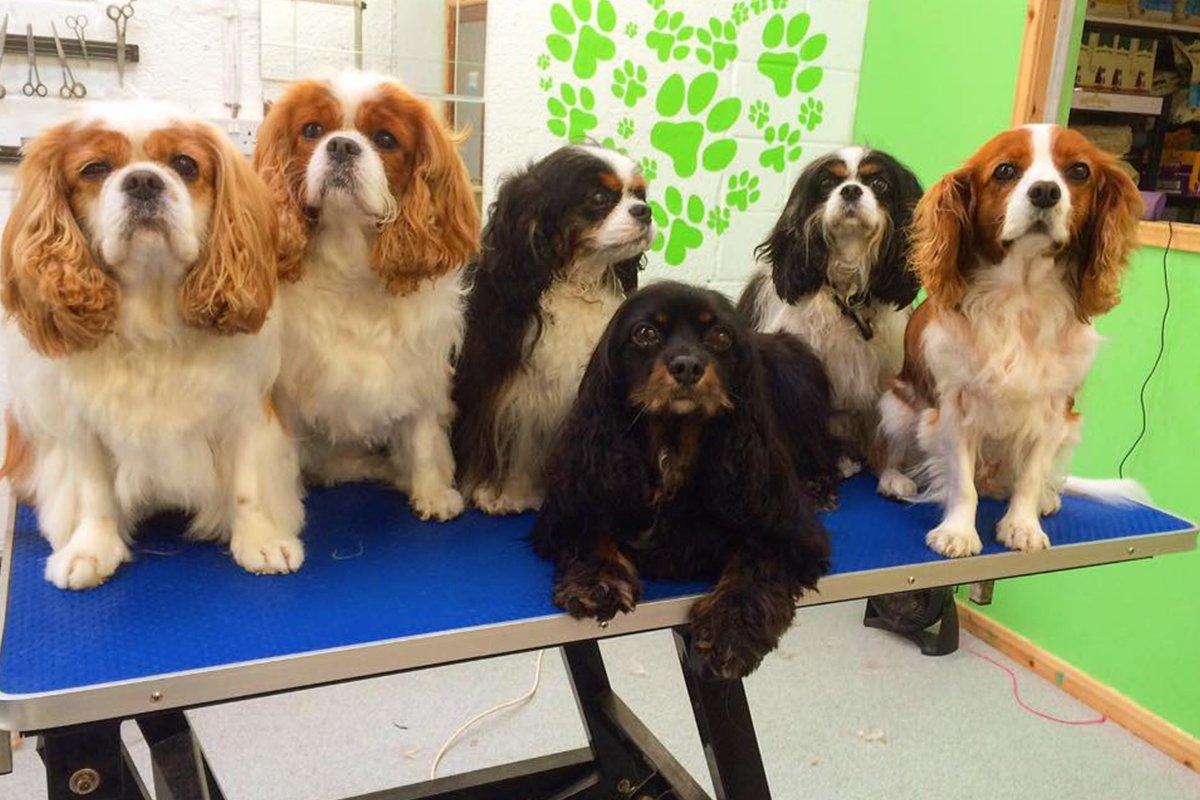 dogsbody-grooming11