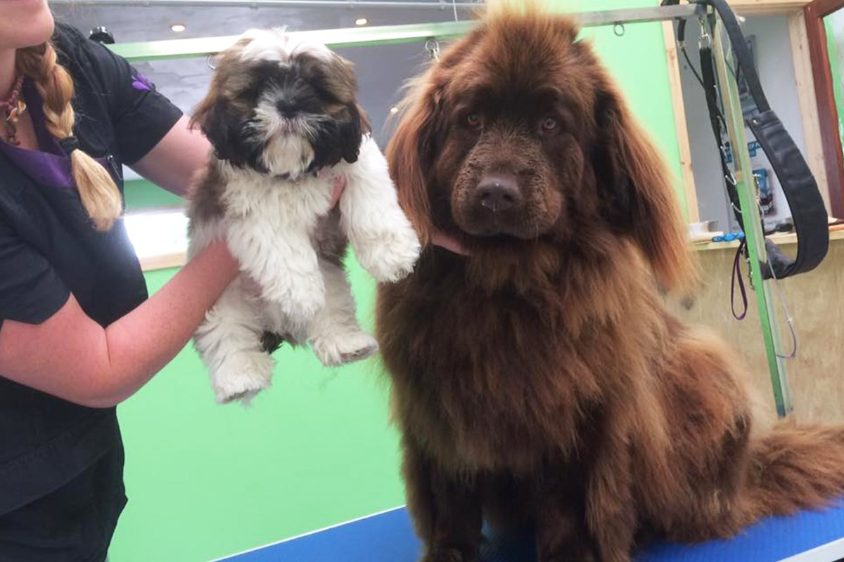 dogsbody-grooming12