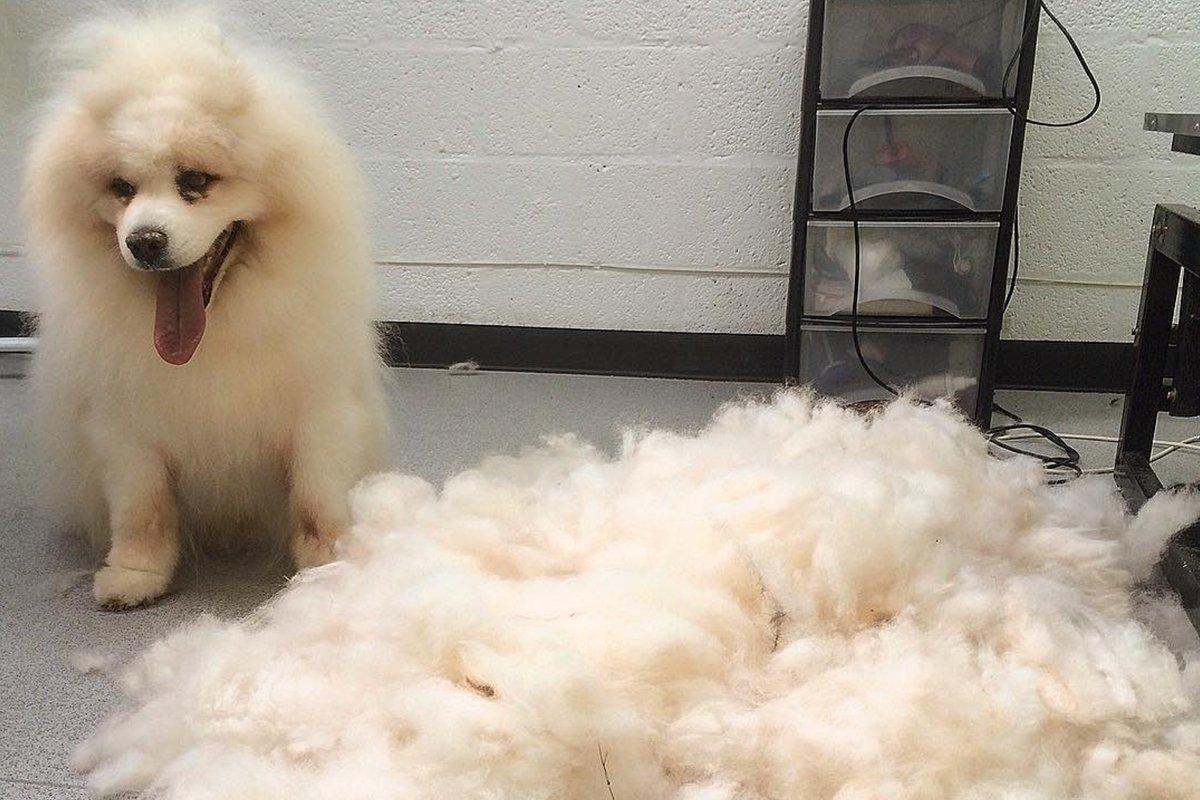 dogsbody-grooming2