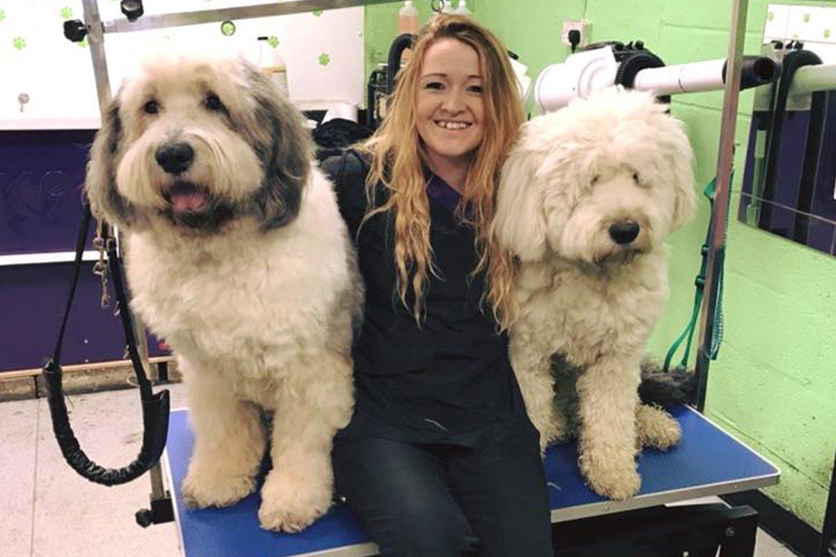 dogsbody-grooming4