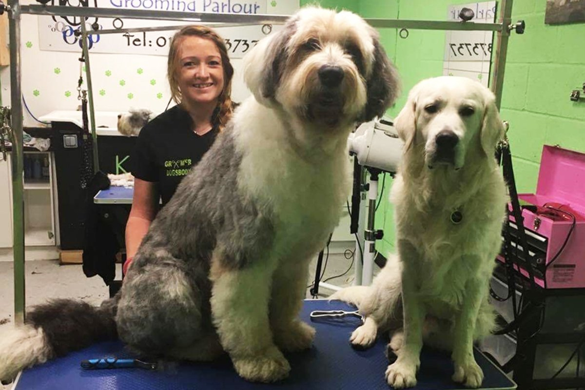 dogsbody-grooming5