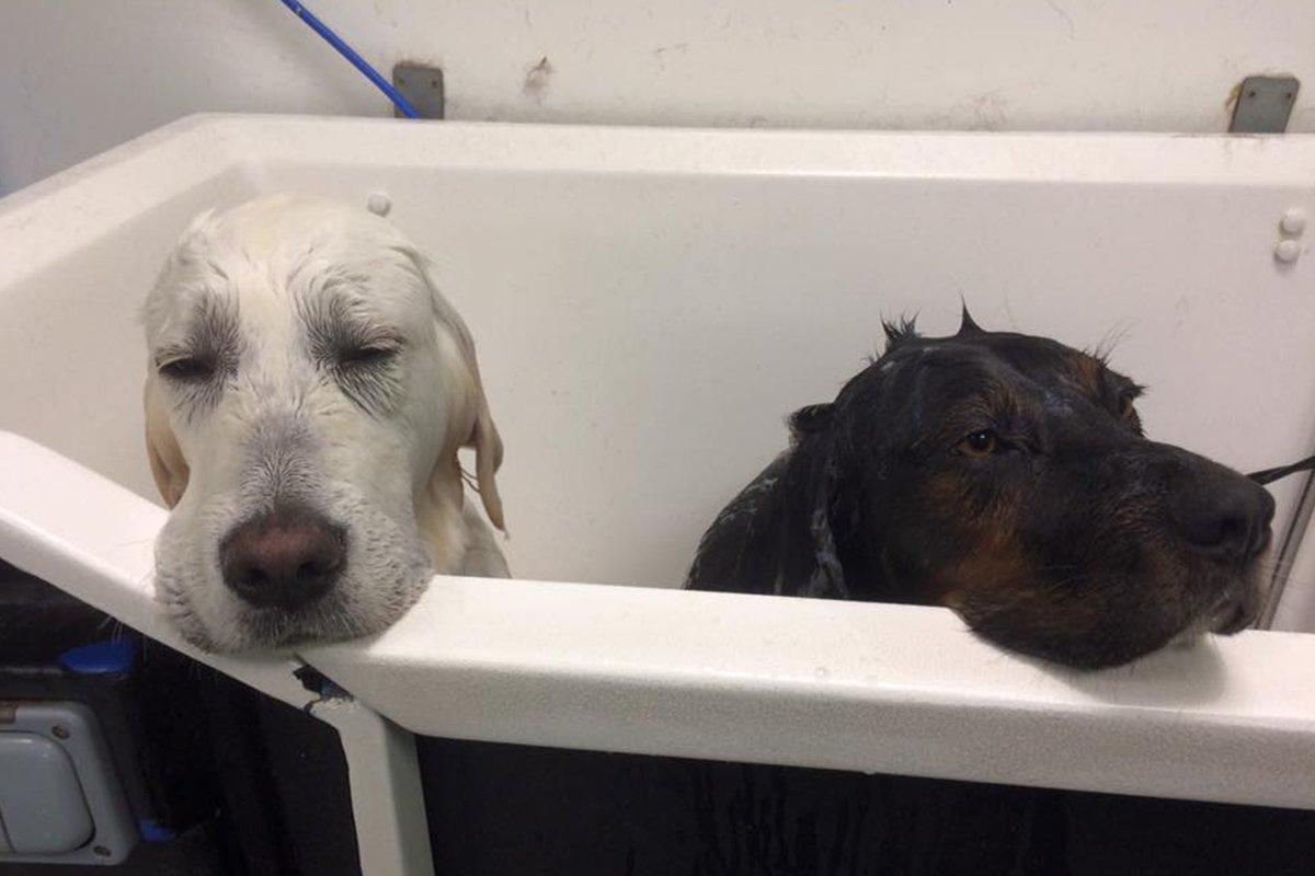 dogsbody-grooming6