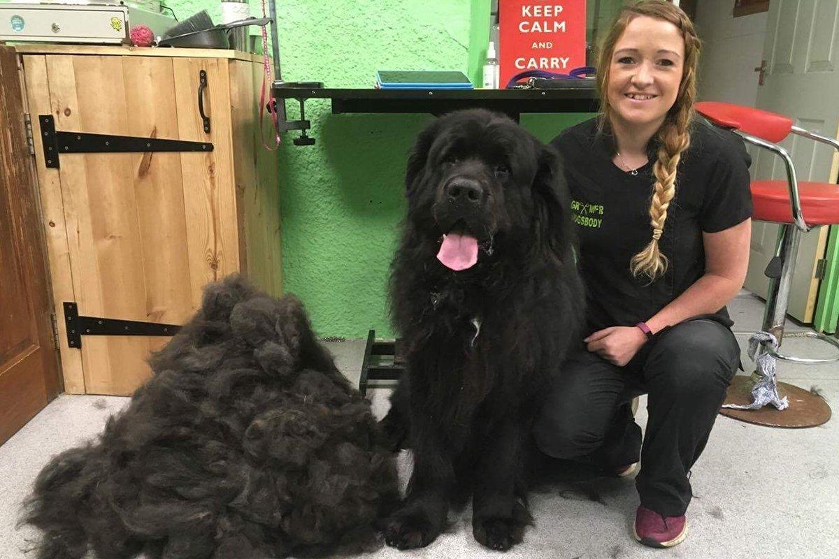 dogsbody-grooming7