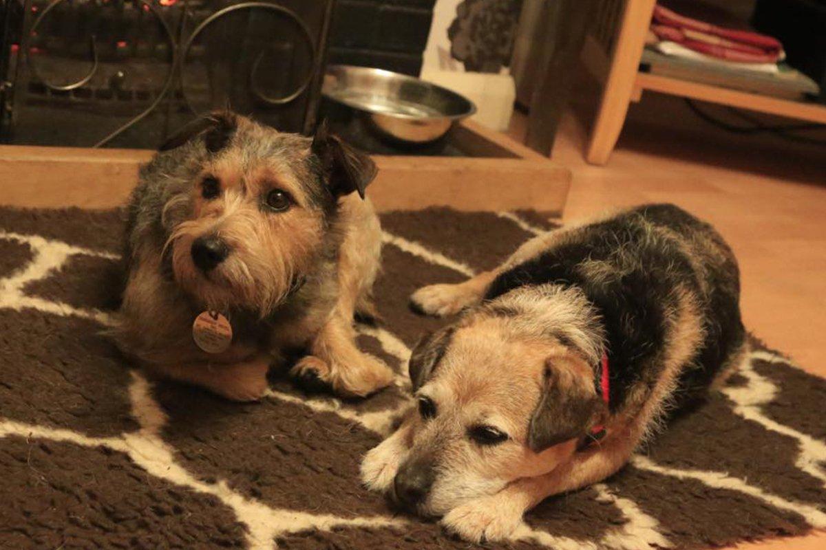 dosgbody-hotel-for-dogs