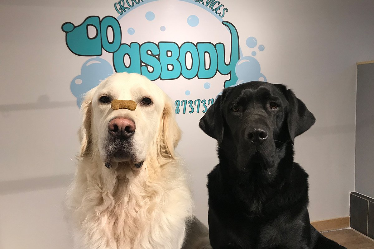 Dogsbody grooming and daycare in Fishguard Pembrokeshire. From dog bathing shampooing combing cutting papering and nail trimming to teeth cleaning, the team at Dogsbody Goodwick will care for your best friend.